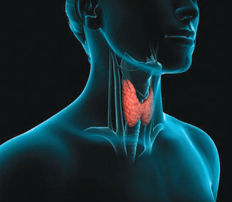 Thyroid Support Formula